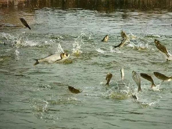 Nằm mơ thấy ao cá là điềm lành hay dữ, mang đến ý nghĩa gì?