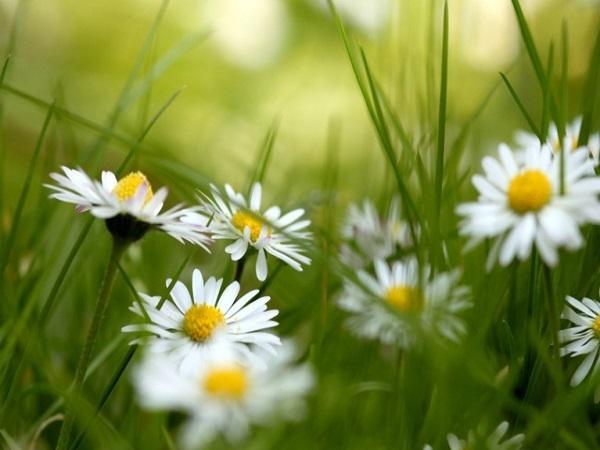 Mơ thấy bông hoa là điềm báo gì, có ý nghĩa gì trong cuộc sống