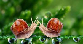 Mơ thấy con ốc là điềm báo gì, đánh con số nào may mắn?