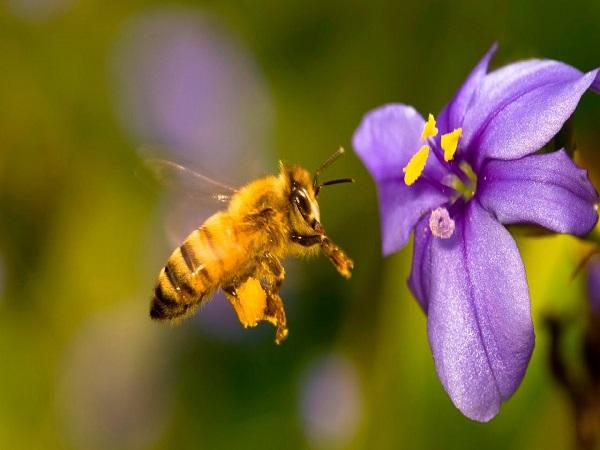 Mơ thấy con ong là điềm báo gì, có ý nghĩa gì trong cuộc sống