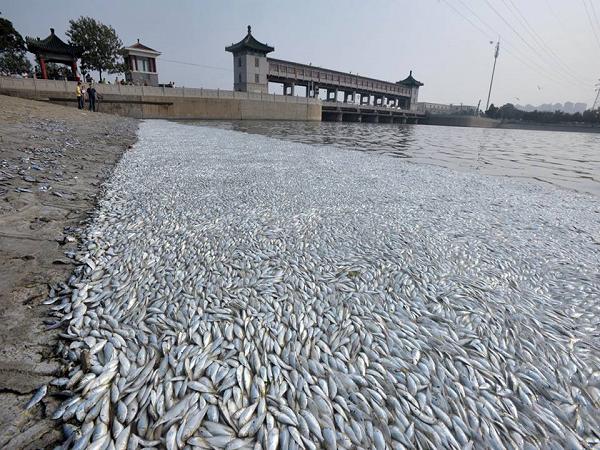 Chiêm bao thấy cá chết điềm báo gì và nên đánh con số đề nào