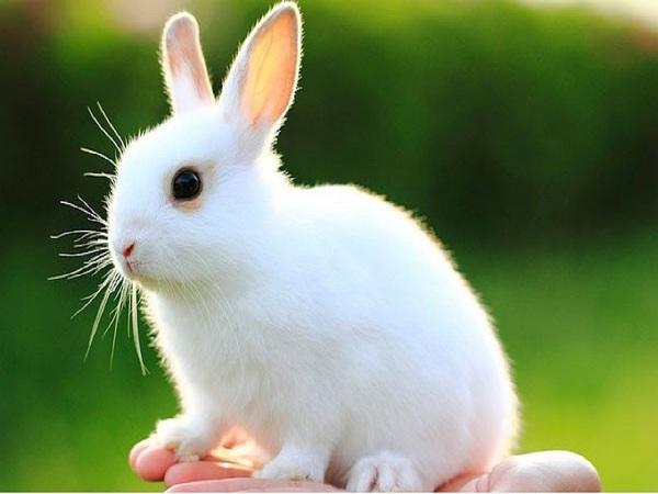 Ngủ mơ thấy con thỏ điềm báo gì và nên đánh con số đề nào