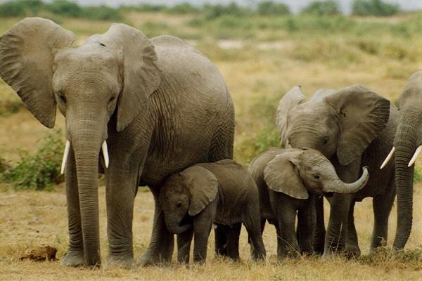 Điềm báo trong giấc mơ thấy con voi