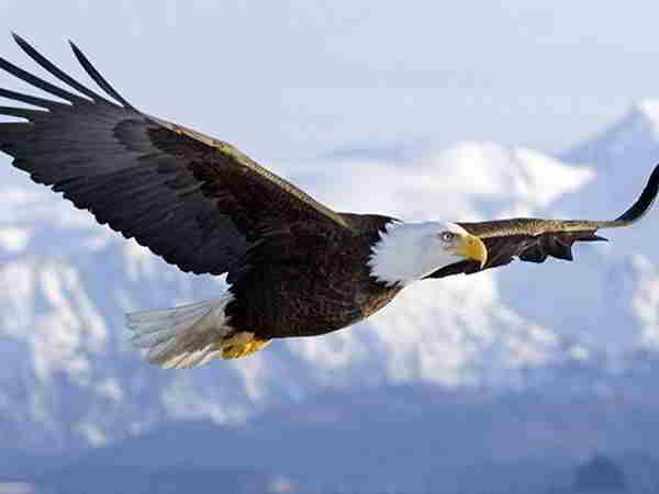 Giải mã giấc mơ thấy chim ưng nên đánh số nào?