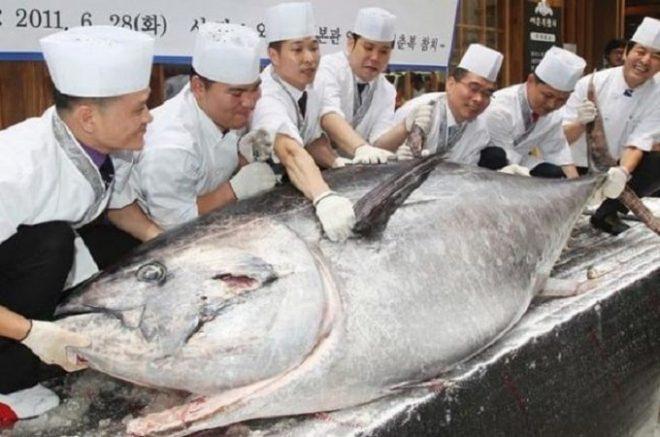 Giải mã giấc mơ thấy ăn cá to điềm gì, đánh con gì